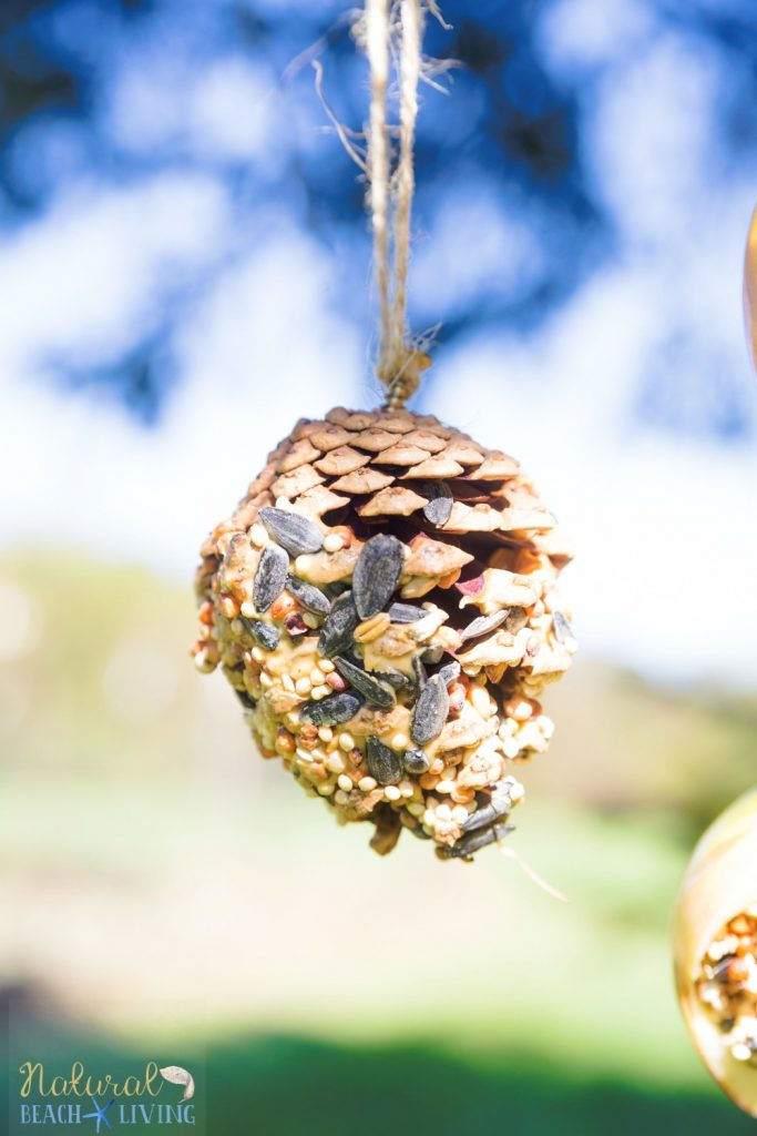 How to Make The Best Pine Cone Bird Feeder, These natural homemade bird feeders are a great hands on activity, Easy Organic Bird Feeder Craft, DIY Bird Feeder, Kid Made Birdseed ornaments, Homemade Bird Seed Ornaments, How to Make bird seed ornaments, DIY birdseed ornaments, Birdseed ornament recipe, Pine Cone Activities for Kids, Nature Activities for Kids, Preschool nature craft, Waldorf, #birdseedornaments #Birdtreats #homemadebirdfeeders #birds #bird #natureactivities