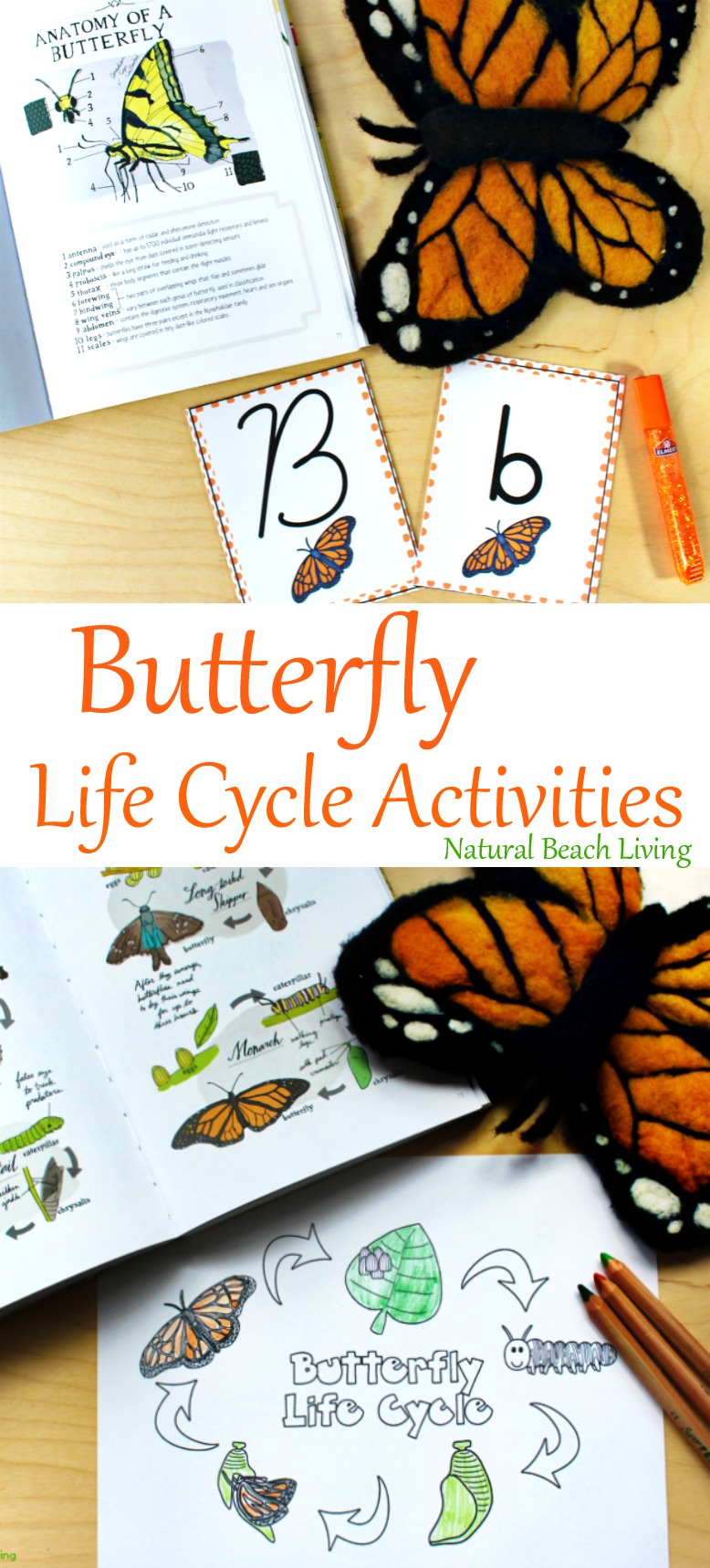 photograph about Butterfly Life Cycle Printable titled The Least complicated Butterfly Everyday living Cycle Pursuits for Youngsters - Organic
