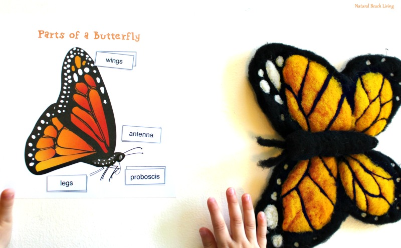 The Best Butterfly Life Cycle Activities For Kids Natural Beach Living