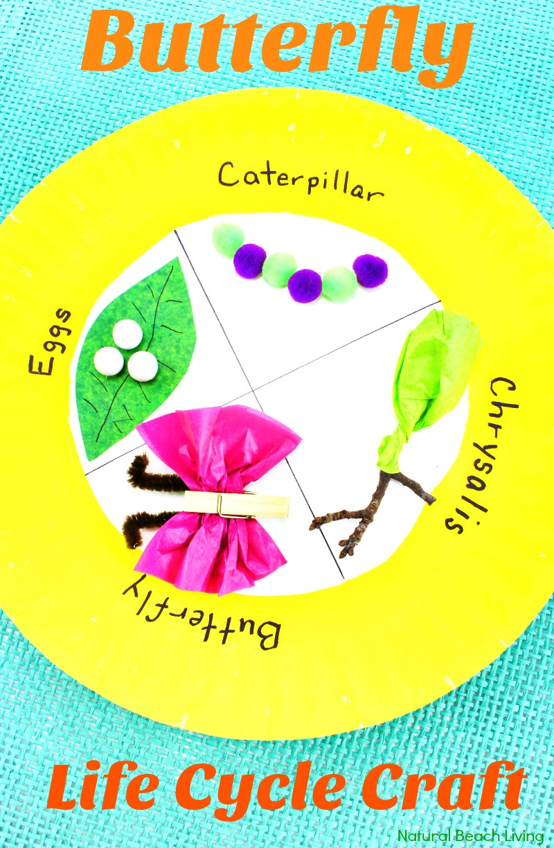 Easy Butterfly Life Cycle Craft Kids Love Paper Plate Craft