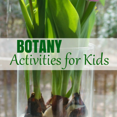 Best Montessori Botany Activities for Kids – Hands On Flower Activities