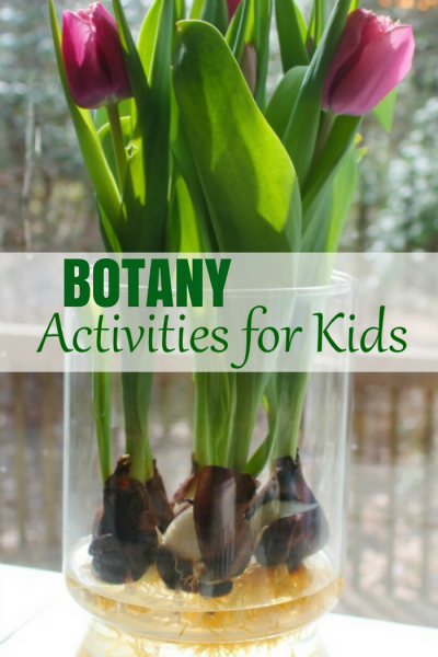 Best Montessori Botany Activities for Kids – Hands On Flower Activities