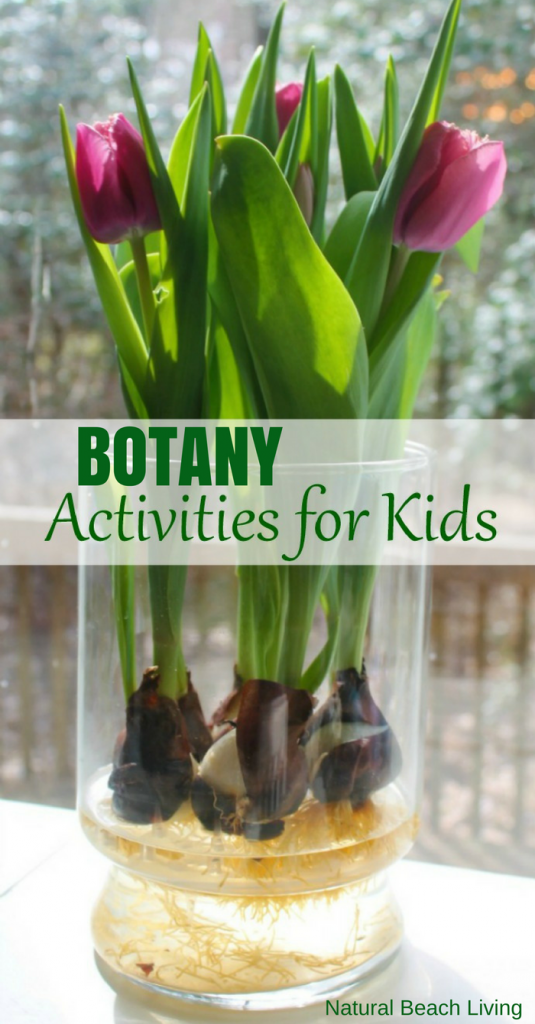 Montessori Botany Activities for kids, Hands on Learning, Montessori Science, Gardening with Kids, Botany Printables, Plant lessons for Kids, Natural Learning, Hands On Flower Activities for Kids, The Study of Plants and Flowers for Kids, Montessori Botany Activities, Montessori Botany lessons & activities for homeschoolers