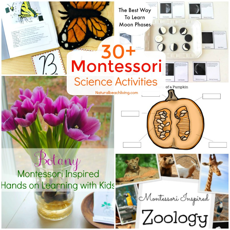 25+ Fun Montessori science activities for seasons, themes, and a variety of hands on activities. Preschool Science experiments, Kindergarten Science Activities, Everything you need to start Montessori science in your home or classroom, Montessori science curriculum for 3-6 year olds, Montessori science experiments for 6-9 year olds , Life Cycles Activities for Kids, Animal Activities for Kids, Montessori toddler activities