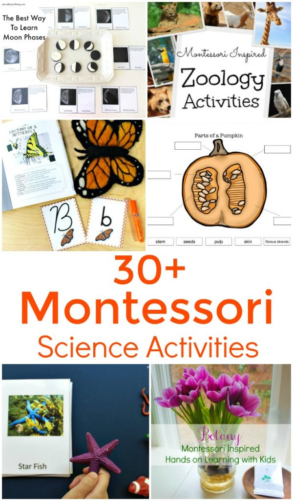 150+ The Best Montessori Activities, Free Printables, Montessori Books, Montessori Preschool, Montessori Spaces, Montessori Toys, Montessori Practical life, Montessori Education, Montessori Science, Montessori Themes, Montessori Geography and more