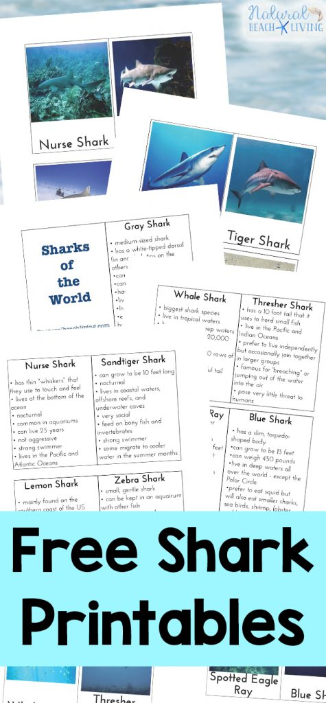 Free Shark Activities and Shark Printables.for Kids, Lots of Shark Week Activities for Kids, Plus, Shark Science, Shark Lesson Plans and Fun Shark Themed ideas