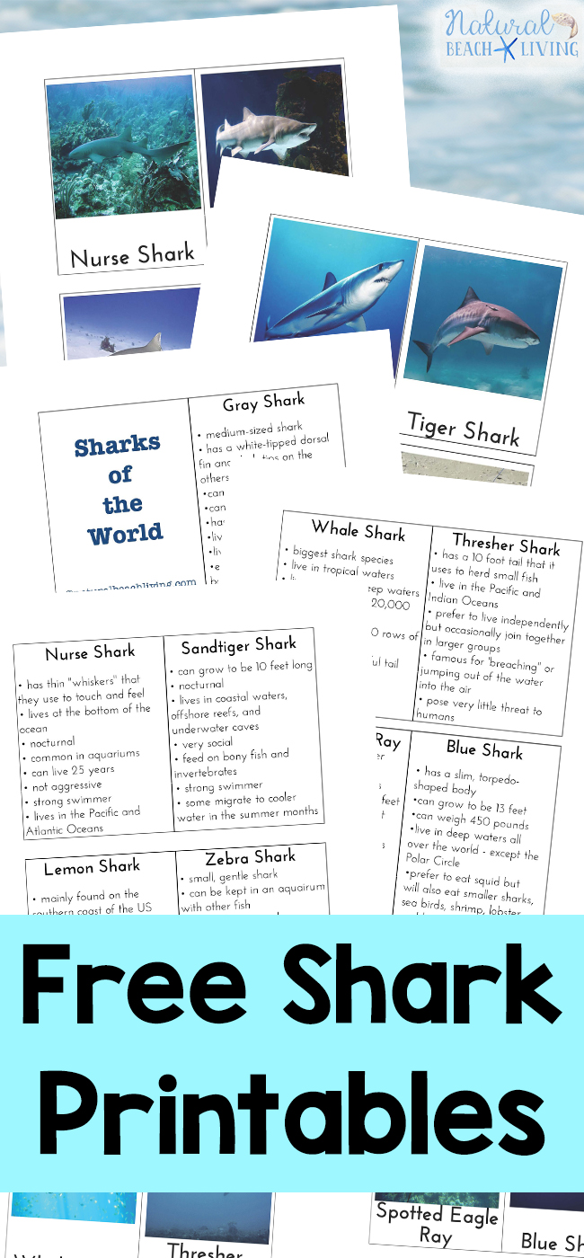 Shark Information For Kids Free Shark Printables