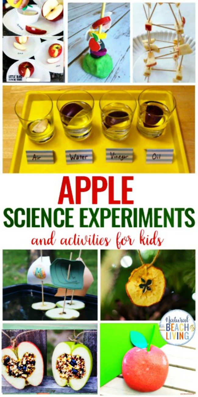 30+ Free Apple Printables for Preschool and Kindergarten, Having an apple theme is the perfect theme for fall learning. Find fun Apple Activities and Printables for Preschool, Pre-K and Kindergarten Hands on Learning. Apple Science and Apple Crafts too!