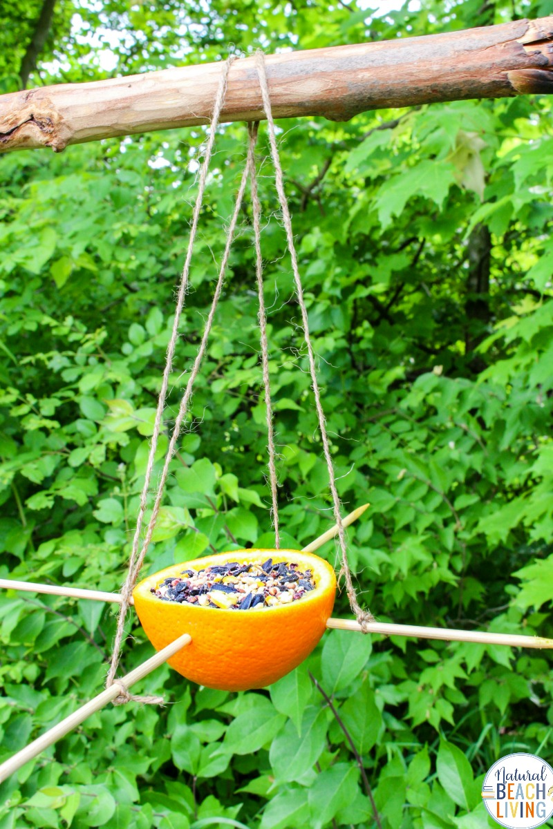 Orange Bird Feeder, Bird Seed Ornaments, Easy Birdseed ornaments for kids and adults to make, Homemade Bird Feeders like the pine cone bird feeder, apple bird feeder, Plastic Bottle Bird Feeder, DIY birdseed ornaments and Bird activities for kids