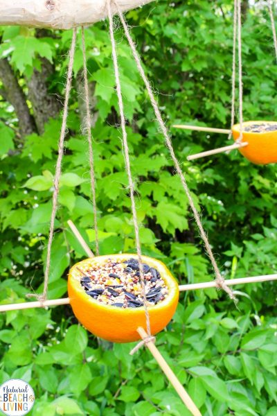 Orange Bird Feeder – Easy Homemade Bird Feeders