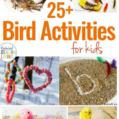 25+ Bird Activities for Preschoolers