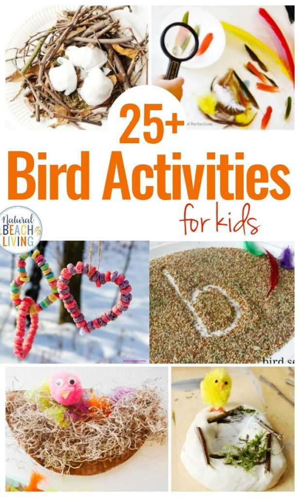 Here You'll find The Best Bird Activities for Preschoolers, All the best ideas for a Preschool Bird Theme with Lesson Plans, Hands on activities, Homemade Bird Feeders and Bird Science Activities for Preschoolers, Bird Crafts and Bird Activities for kids
