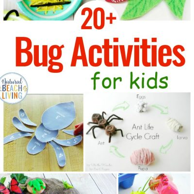 25 Bug Activities for Preschool