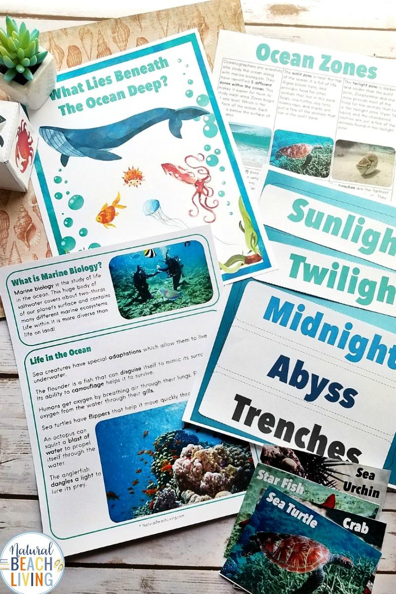 Ocean Science Activities for Kids – Unit Study