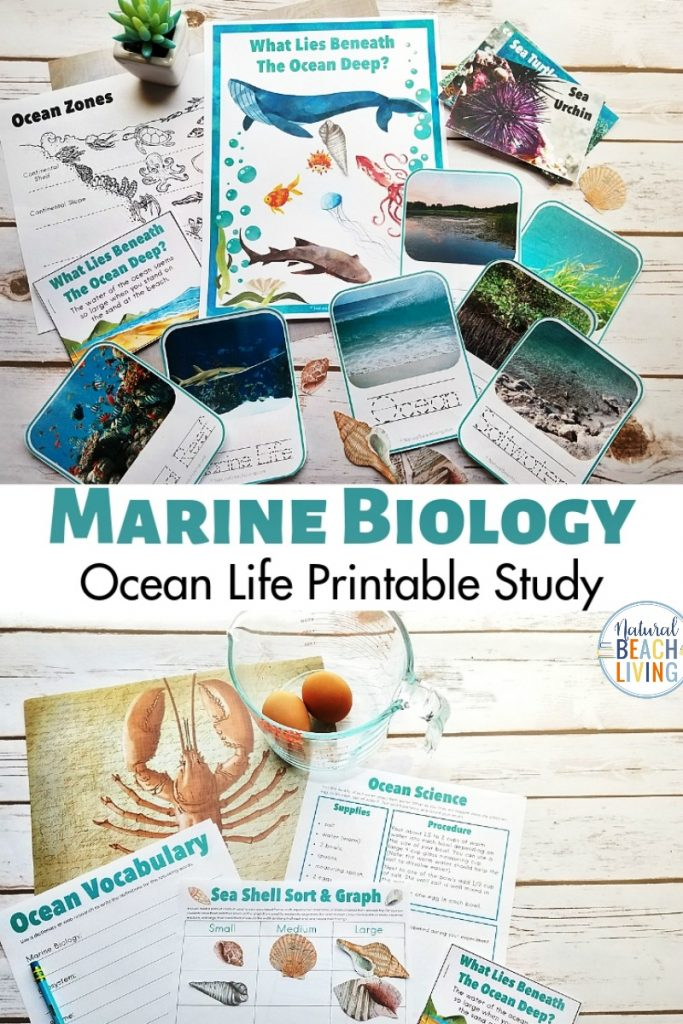 The Best Ocean Unit Study for Kids, Marine Biology for Kids, Under the Sea activities, Summer Nature Table and Ocean Theme Printables for Kids, These Homeschool Printables are Perfect to add to your Ocean Activities or Under the Sea Theme, Beach Theme Lesson Plans, ocean unit study for elementary children and kindergarten, beach unit study, ocean studies for elementary students