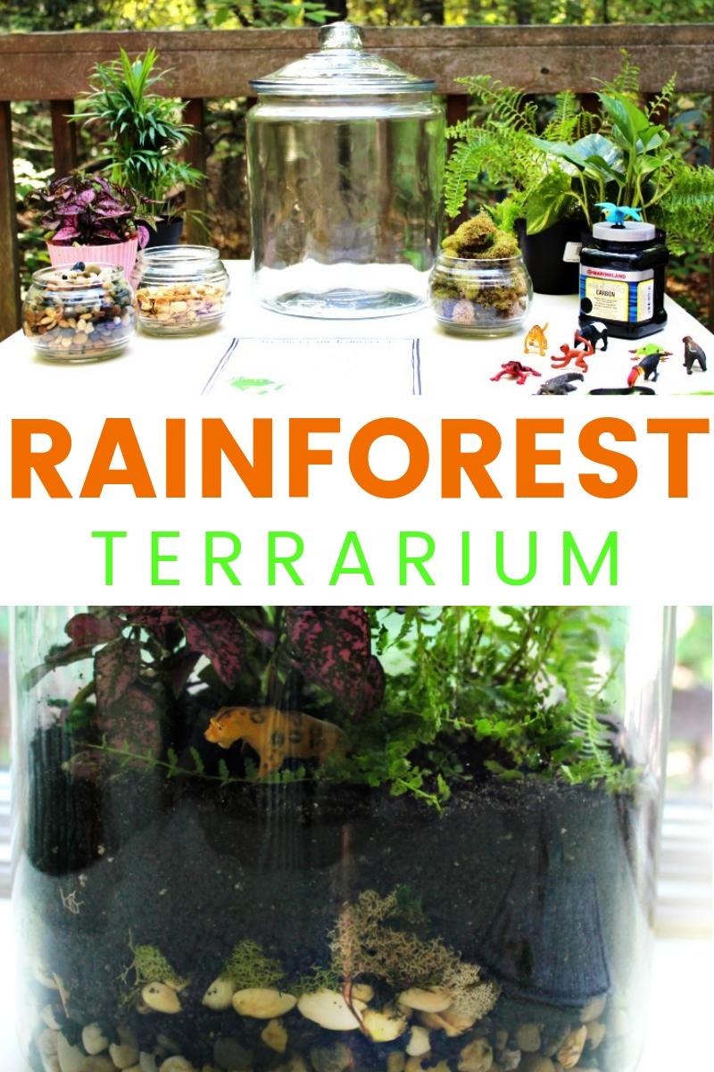 How to Make a Rainforest Terrarium with Kids
