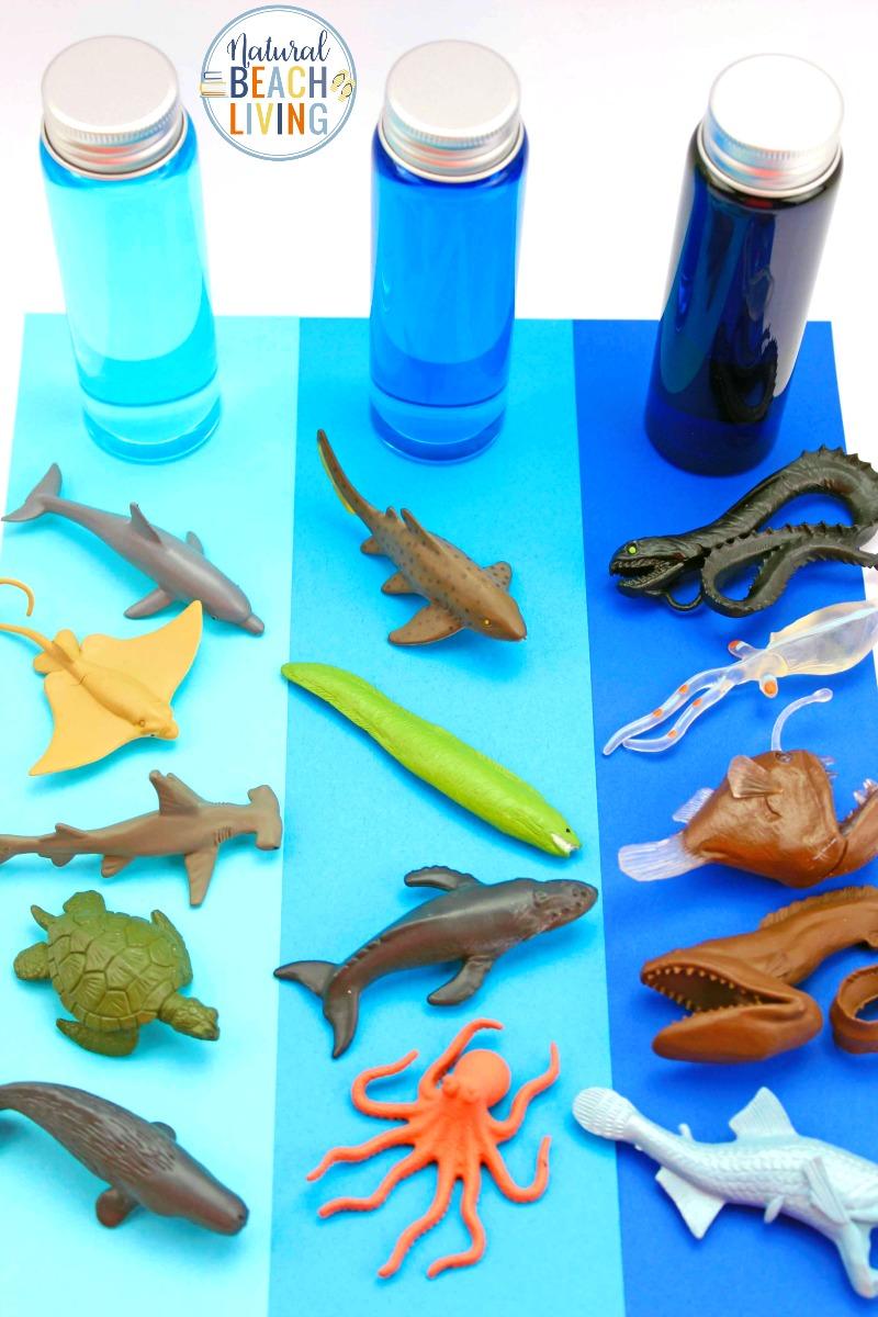 Ocean Zones for Kids and Ocean Activities