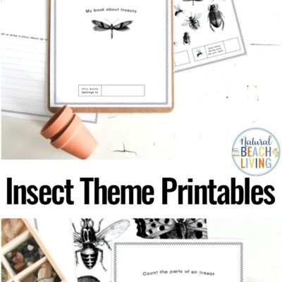 Preschool Insect Theme Printables – Free Insect Activities for Preschoolers