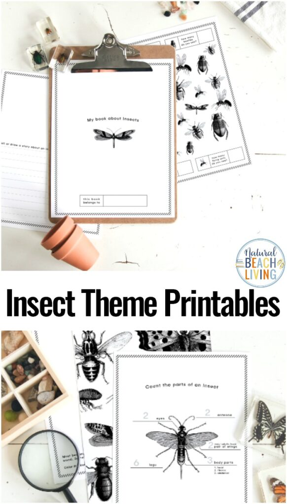 These Preschool Insect Theme Printables are perfect for teaching your child all about the bug habitats and insect body parts. If you're looking for a way to get outside and explore Insect Science Activities for Preschoolers, you're going to want these free insect printables.  Insect Activities for Preschoolers