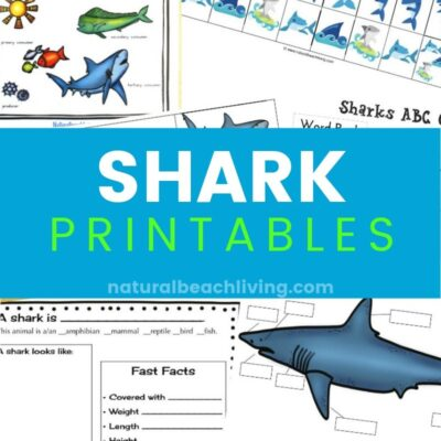 The Best Shark Printable Activities for Kids – Shark Lesson Plans