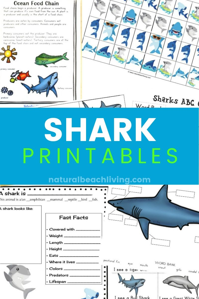 image regarding Shark Printable named The Suitable Shark Printable Routines for Young children - Shark Lesson