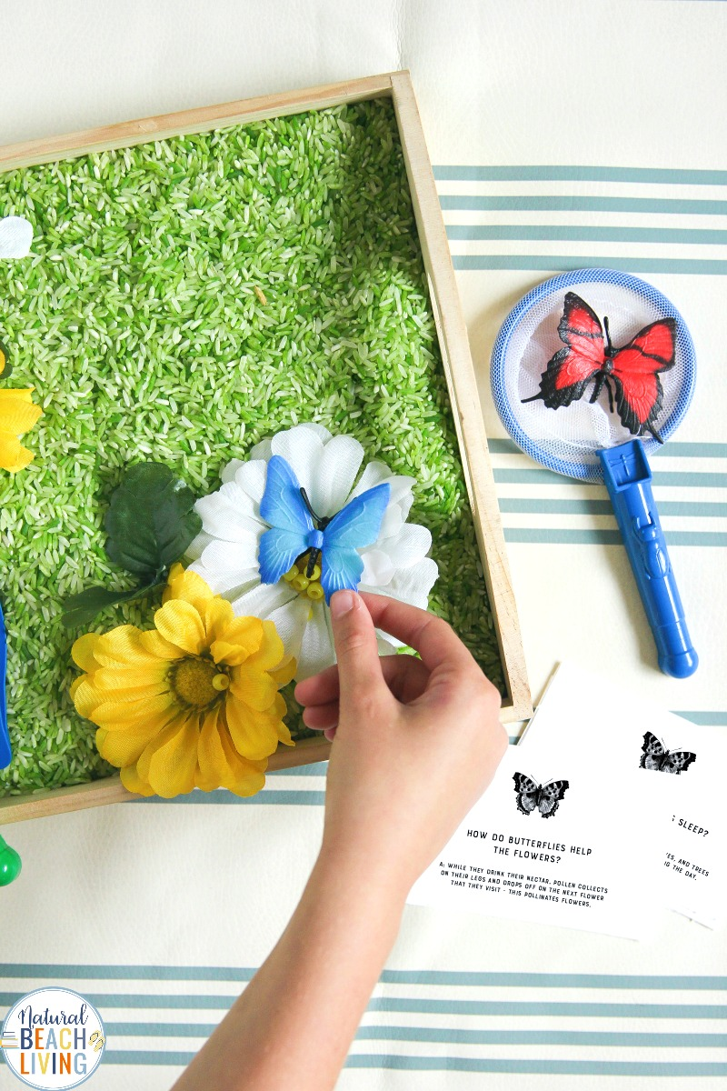 Butterfly Sensory Bin and Butterfly Preschool Activities with free printables