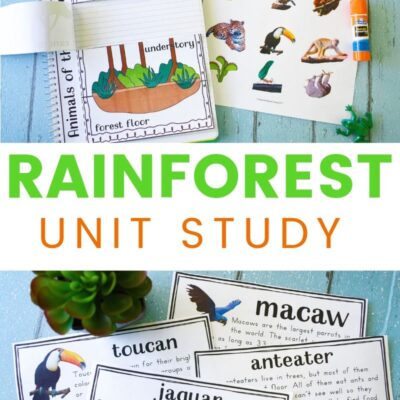 Rainforest Lesson Plans and Rainforest Activities for Kids