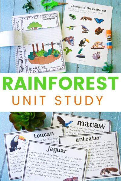 rainforest unit study guide