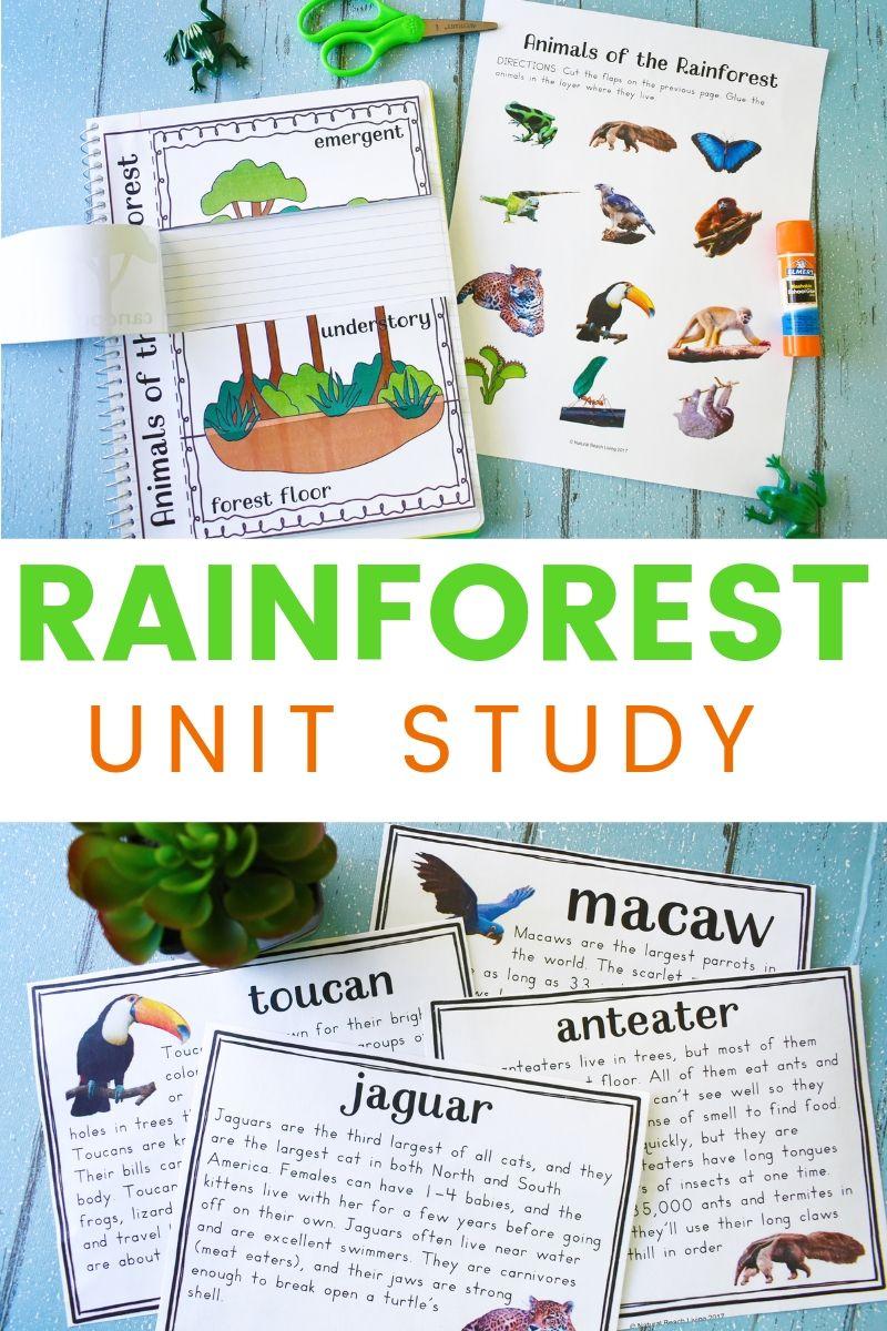 Rainforest Lesson Plans and Rainforest Activities for Kids