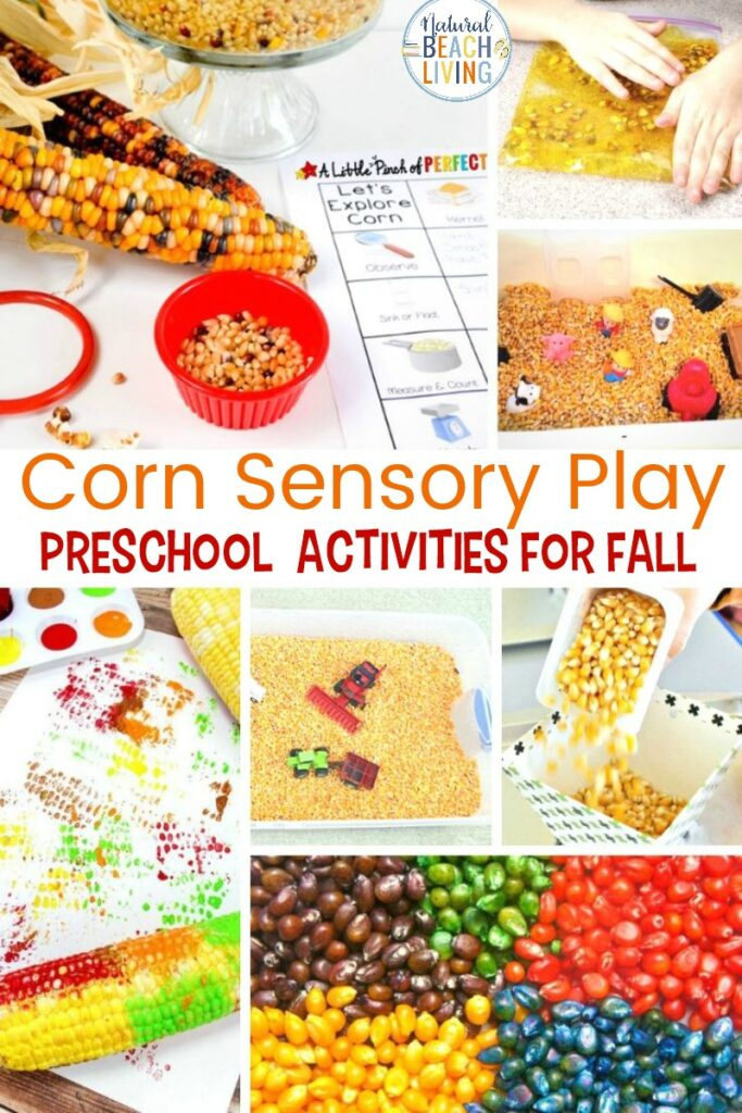 When you think of fall sensory activities, Corn Sensory Play is at the top of the list. Corn sensory activities are the perfect idea for all of your fall sensory play ideas. Fall sensory play is the perfect way for toddlers and preschoolers to explore lovely colors and scents that will delight your child's senses.