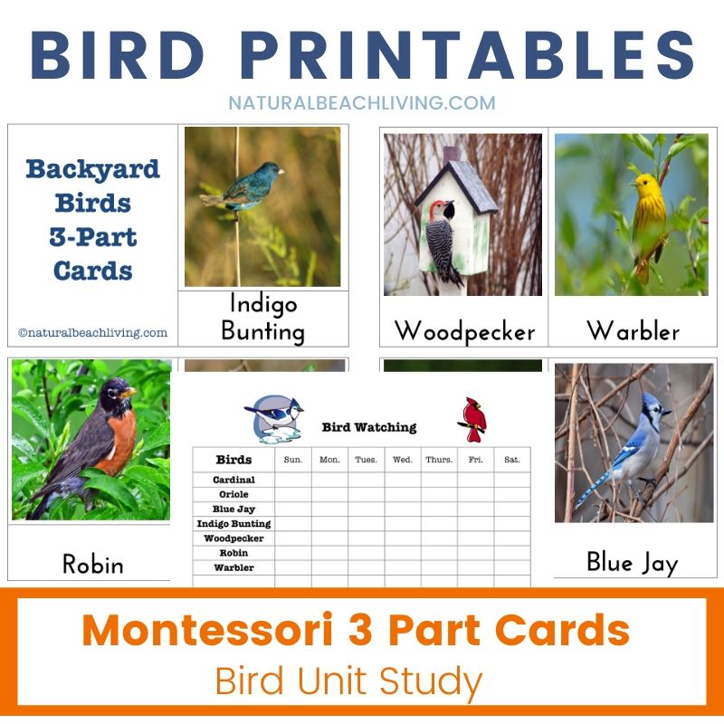 Bird Printables and Bird Activities for Kids, Observing & Learning Backyard Birds with Free Printables and The Best Bird Activities for Kids, Backyard Birds Watch Chart, Teaching about Backyard Birds and Bird Watching with Kids, Bird Activities for Preschoolers, Montessori Printables, Homeschooling Bird Printables and Bird Unit Study, Nature Study, Bird Activities for Kids and Homemade Bird feeders