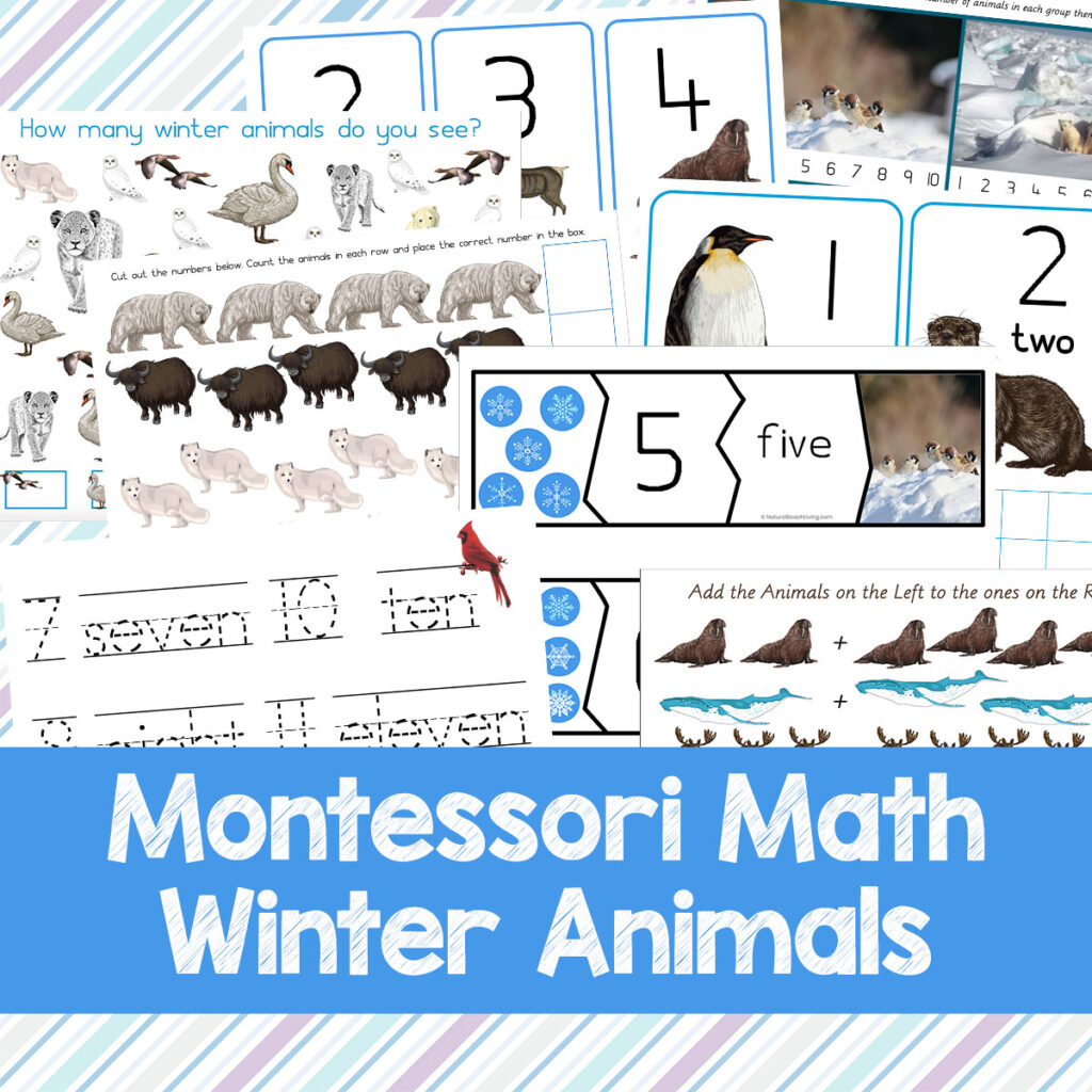 Learning with Winter Animals Montessori Math is so much Fun, These Montessori Math Activities for Preschoolers and Kindergarten are perfect for winter math activities, themed lesson plans, and learning centers. Winter Animals Printables and Winter Math Activities are a favorite winter preschool theme. Grab the best Math Activities for Kindergarten and Preschool Math Printables Here