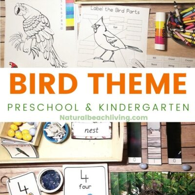 Kindergarten and Preschool Bird Theme Activities Unit Study