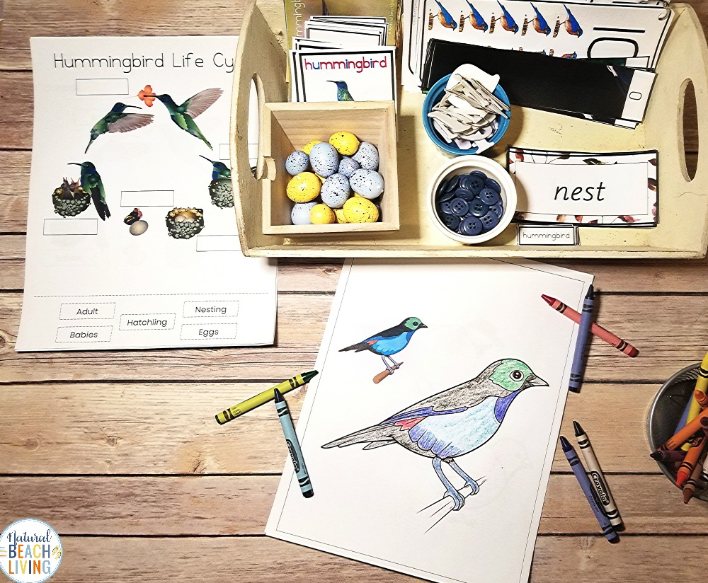 This is The Best Kindergarten and Preschool Bird Theme, lovely Montessori Bird Activities and bird theme printables that include How to Teach About Birds, bird science activities, Math Activities, Art, Bird 3 part cards, bird Life cycle, Parts of a bird and a complete Kindergarten Bird Unit Study
