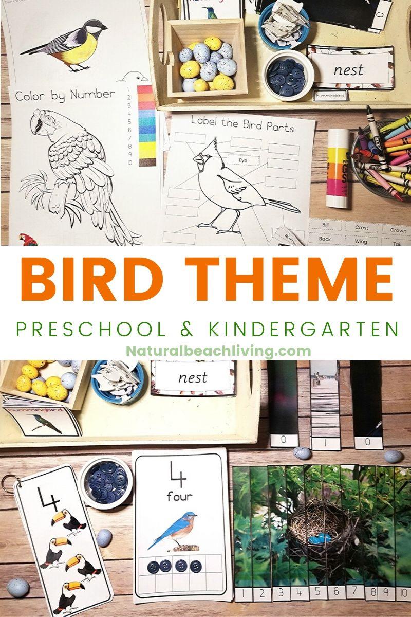 Kindergarten and Preschool Bird Theme Activities Unit Study