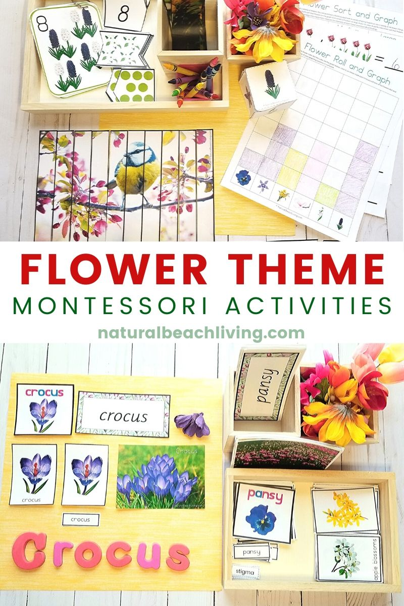 Montessori Flowers 3 Part Cards and Language Cards