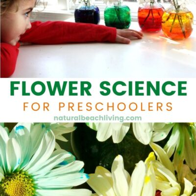 Flower Science Activities for Preschool and Kindergarten