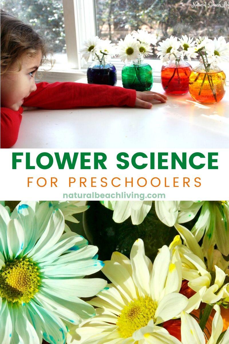 Flower Science Activities for Preschool and Kindergarten