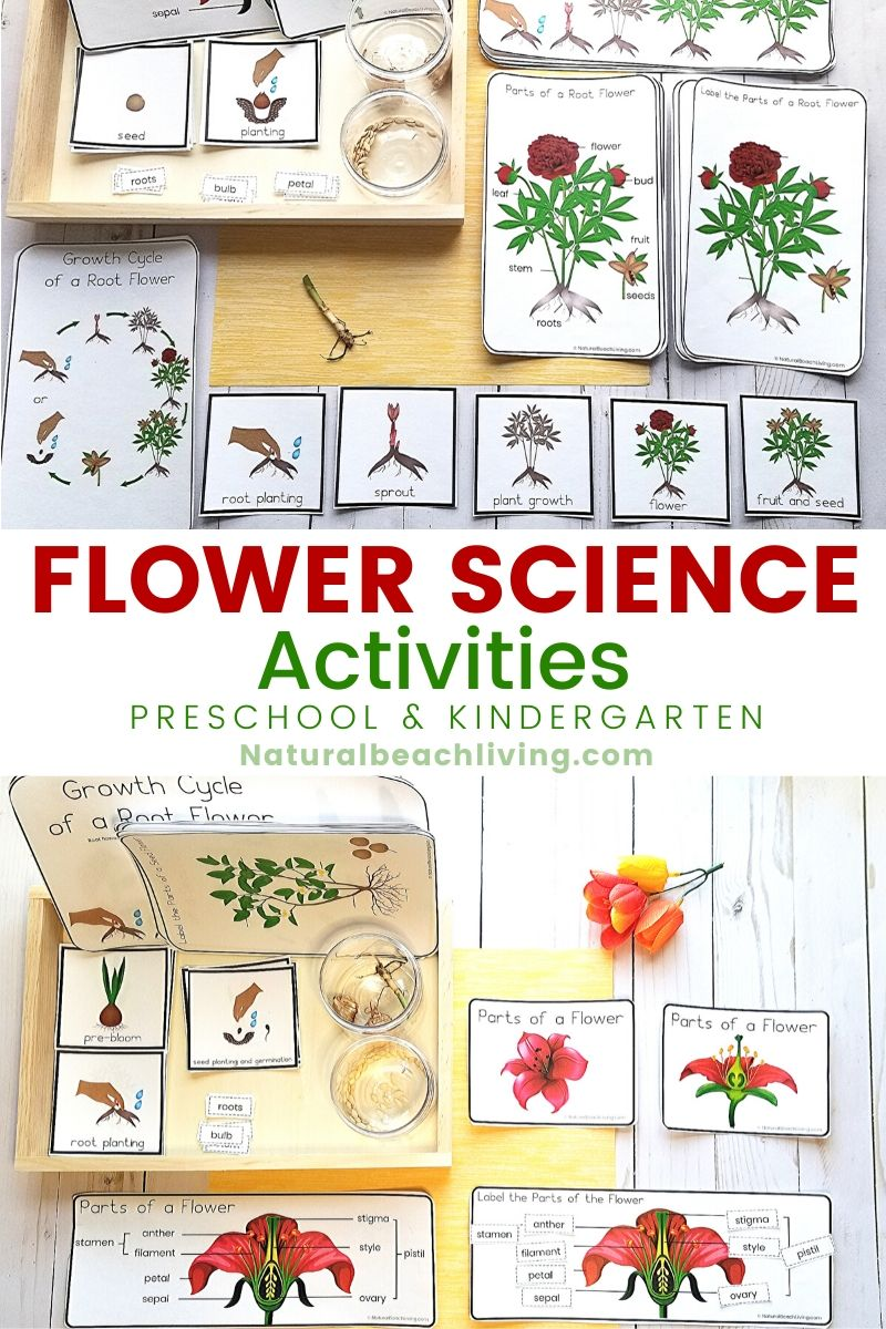 25 fun spring science activities for kids of all ages. From preschoolers to preteens, you'll find fascinating Science projects to try with flowers, jelly beans, seeds, water, static electricity, butterflies, birdseed ornaments, and more. FUN SPRING THEME IDEAS and Spring Activities for Preschoolers Science