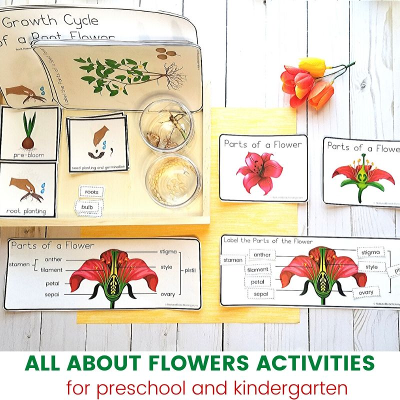 These Flower Theme Preschool and Kindergarten Activities are perfect for Spring and summer learning. Whether you want a Preschool Flower Unit Study, Montessori activities for Spring, or even Flower Science Activities your Children will love these fun hands on activities.