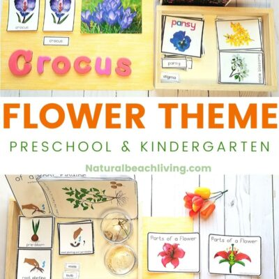 Flower Theme Preschool and Kindergarten Activities