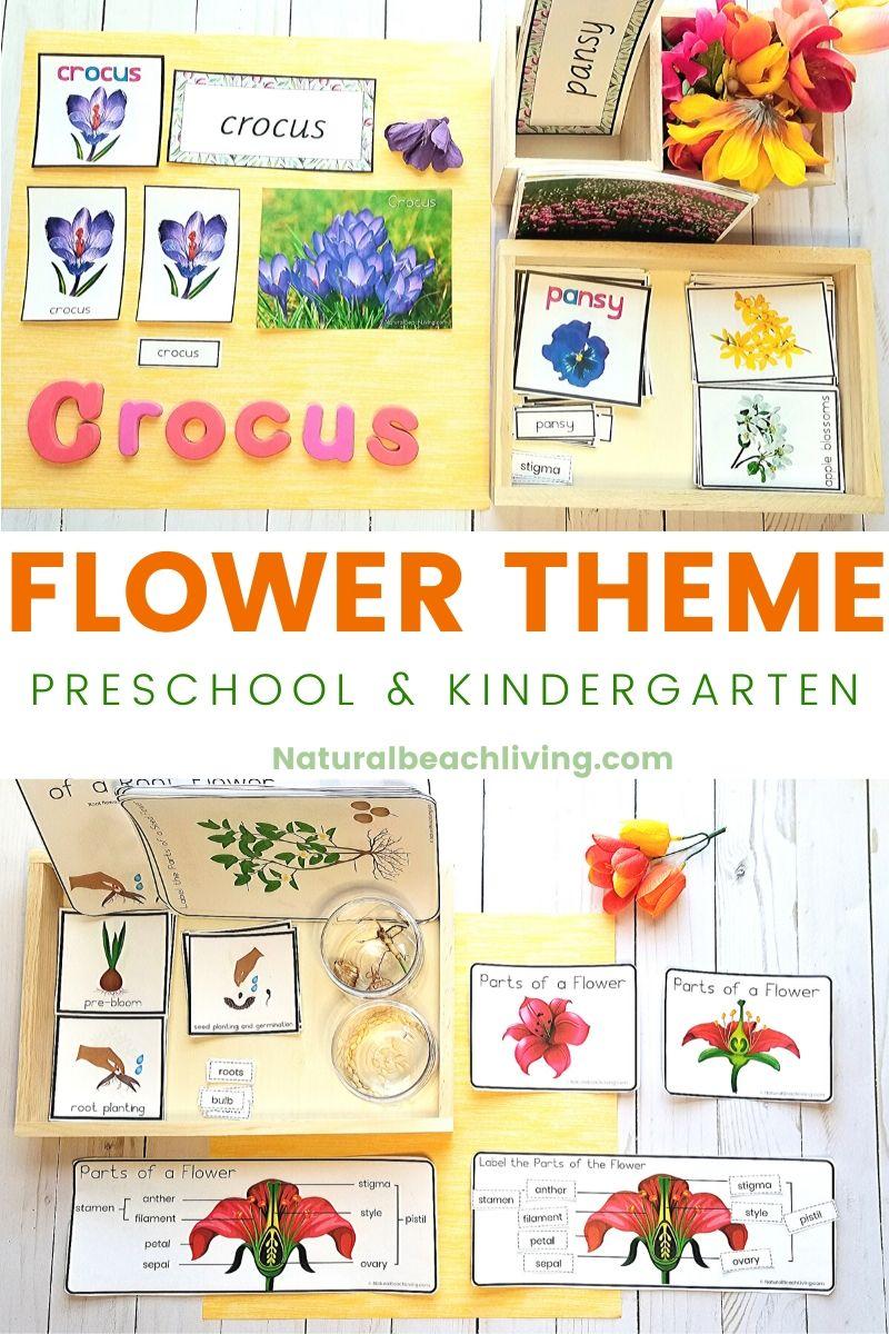 Flower Theme Preschool and Kindergarten Activities