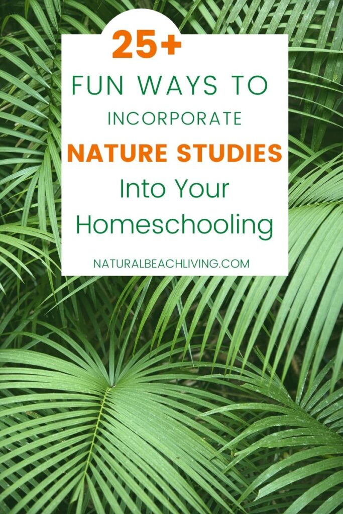 How to Incorporate Nature Studies Into Your Homeschooling All Year Long, Here are 12 Months of Nature Study Ideas, Nature Activities for kids, Spring Themes, Winter Themes, Fall Themes, and Summer Themes for simple educational ideas kids love. You'll Find Animal activities, Science for Kids, Galaxy, Ocean, Flowers, and so much more.