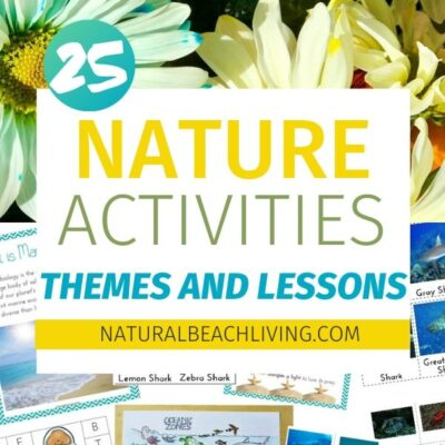 Fun Ways to Incorporate Nature Studies Into Your Homeschooling All Year Long