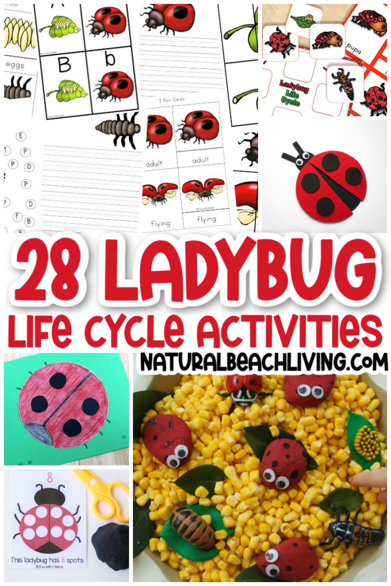 30+ Ladybug Life Cycle Activities and Crafts