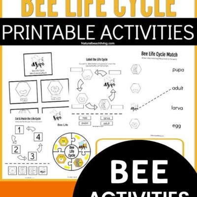 Life Cycle of a Bee Printables for Preschool and Kindergarten
