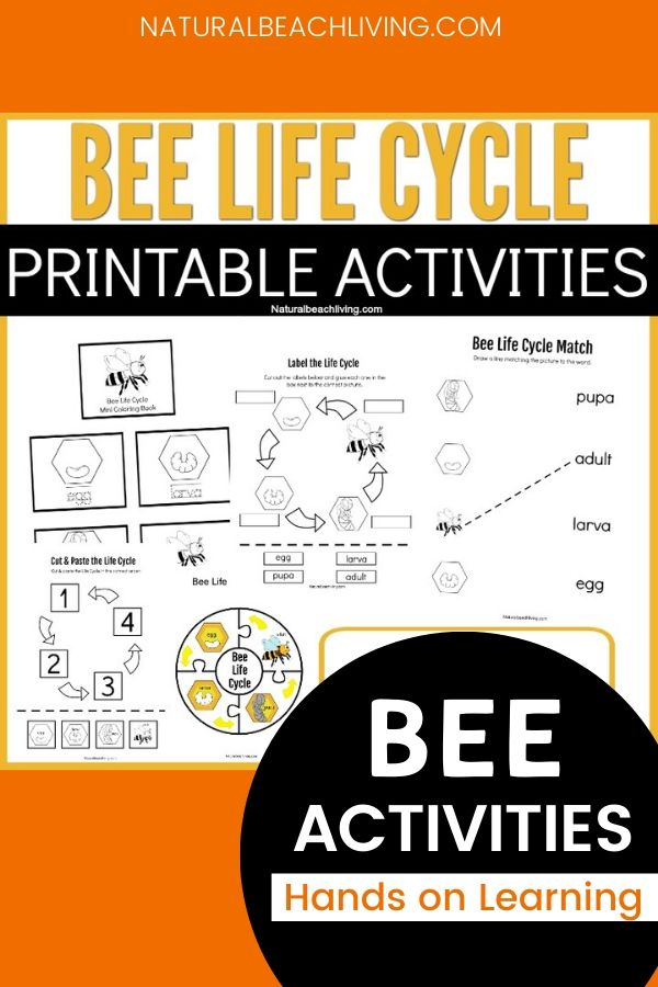 These Life Cycle of a Bee Printables are a great resource for kids to use and enjoy hands on activities from. These Honey Bee Life Cycle Worksheets are not only easy to use, but they're also great for teaching and to encourage learning about bees for preschoolers.