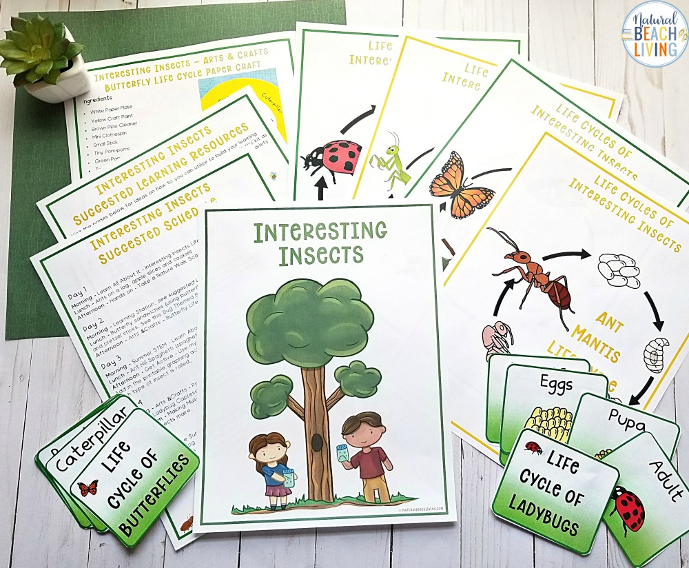 This Summer Camp at Home is perfect for your nature kids. Over 25 Bugs and Insect Activities and Crafts for Kids. Use This Bugs and Insects Summer Camp Theme Guide to make great memories all summer long. Outdoor Games, scavenger hunts, life cycle activities and so much more.