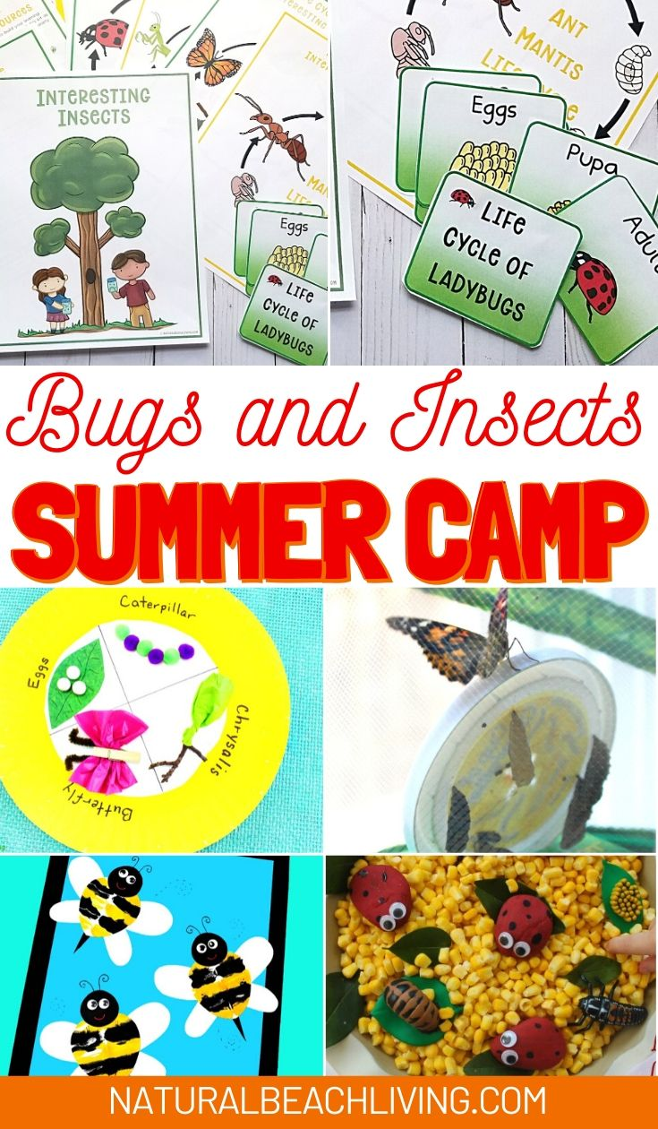 Bugs and Insects Summer Camp Theme Ideas