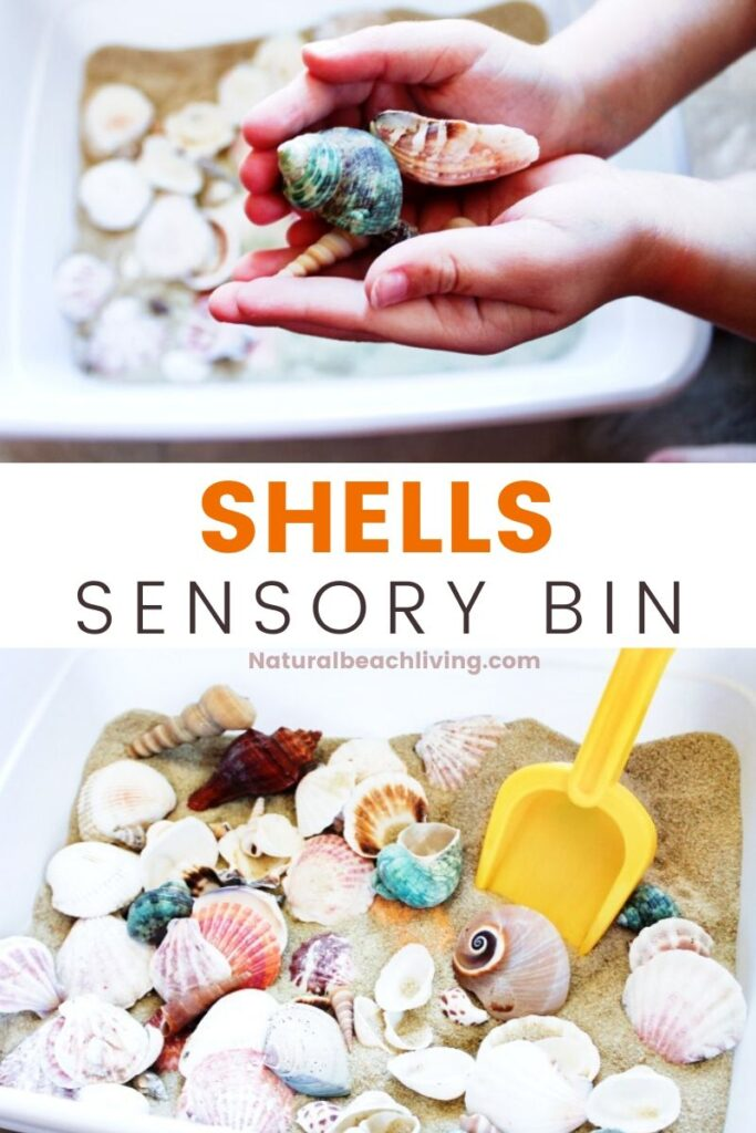 The kids are going to have so much fun with this Seashells Sensory Bin. This simple beach or sand seashell sensory activity makes a wonderful sensory play experience. It's great for exploring different shapes, textures, and is perfect for adding to an ocean theme or preschool science table.